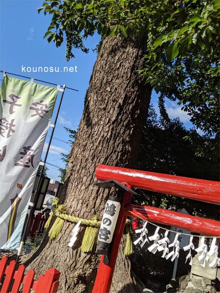 鴻神社の夫婦銀杏